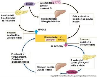 jó a glükóz a fogyáshoz fogyjon a 40-es évek végén