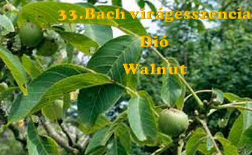 Dió 33.Bach virágesszencia