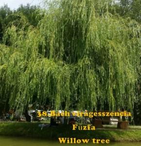 Fűzfa 38. Bach virágesszencia