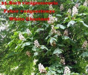 Fehér vadgesztenye 35.Bach virágesszencia