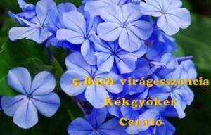Kékgyökér 5. Bach virágesszencia