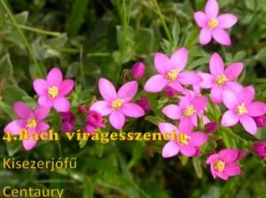 Kisezerjófű 4. Bach virágesszencia
