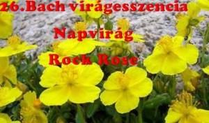 Napvirág 26.Bach virágesszencia