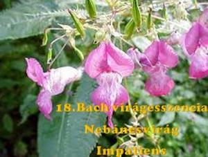 Nebáncsvirág 18. Bach virágesszencia