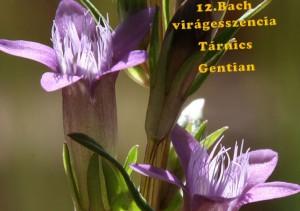 Tárnics 12. Bach virágesszencia