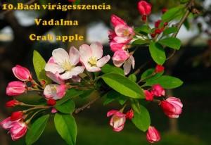 Vadalma 10.Bach virágesszencia
