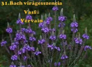 Vasfű 31.Bach virágesszencia
