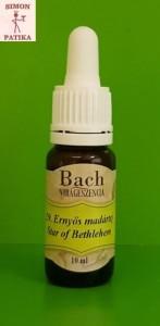 Ernyős madártej Star of Betlehem Bach virágeszencia