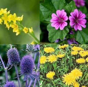 Kálium tartalmú gyógynövények